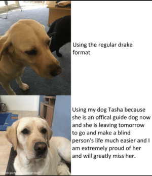 Good luck Tasha: Using the regular drake  format  Using my dog Tasha because  she is an offical guide dog now  and she is leaving tomorrow  to go and make a blind  person's life much easier and I  am extremely proud of her  and will greatly miss her.  girl okay  you T Good luck Tasha