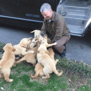 Dogs, Target, and Tumblr: USOOT 021800 ups-dogs:Dean Earby in Cleveland, TN was attacked by a vicious pack of wild dogs. He escaped with only slobber and scratches. 😍😍😍 Lisa Earby