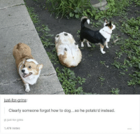 corgo does a tuber ~Dogreen: ust-for-grins  Clearly someone forgot how to dog...so he potato'd instead.  just for grins  1,478 notes corgo does a tuber ~Dogreen
