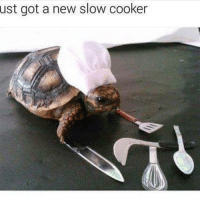25 best cute turtle memes cant tell memes the memes