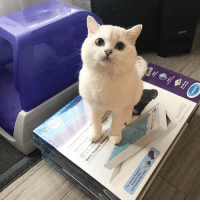 "Memes, 🤖, and Cat: utter Berra Today is our 2nd week partnering with PetSafe Brand to give away a ScoopFree litter boxes (it's some sort of robot that might be taking over the planet!) We will randomly choose a winner every week for 4 weeks. Our 2nd week giveaway is ScoopFree® Original Self-Cleaning Litter Box & pack of three refill trays  Here is how to enter:  1) Follow @PetSafe on Instagram and Facebook  2) Tag at least 2 of your friends who would enjoy a ScoopFree litter box  3) Post a photo of your cat and Use hashtag #WCCxPetsafe and #Catspiracy  4) Your profile has to be public for us to see your photos!  You can enter as many times as you want.  We will announce the winner every Wednesday for 4 weeks.  Use a coupon code ""WCCScoopFree20"" for $20 off from the cost of the ScoopFree Original now thru April 7  Lastly, Congratulations to @nicolebaileyross You're the winner of our 1st week giveaway! We will DM you for more information."