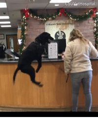 Dogaroo is excited to see the vet.  By Colorado State University Veterinary Teaching Hospital: UVetHospital  Colonsto State Univernity Dogaroo is excited to see the vet.  By Colorado State University Veterinary Teaching Hospital