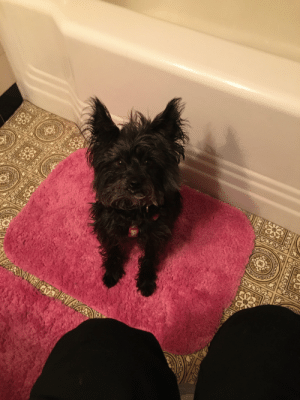 My dog looks concerned as I prepare for a colonoscopy on the porcelain throne tonight. It's great to have the company❤️: VƏVSEVTEVE My dog looks concerned as I prepare for a colonoscopy on the porcelain throne tonight. It's great to have the company❤️