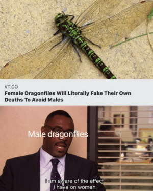 Aware: Vт.cO  Female Dragonflies Will Literally Fake Their Own  Deaths To Avoid Males  Male dragonflies  I am aware of the effect  I have on women.