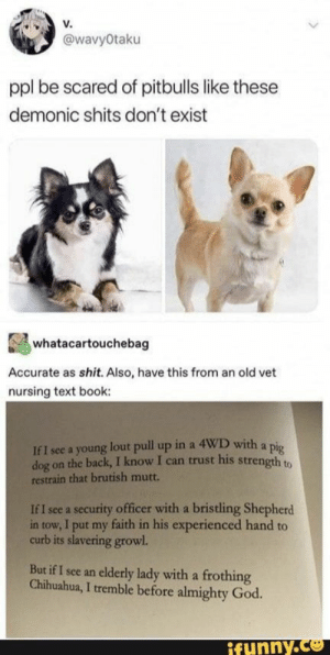 : v.  @wavyOtaku  ppl be scared of pitbulls like these  demonic shits don't exist  whatacartouchebag  Accurate as shit. Also, have this from an old vet  nursing text book:  If I see a young lout pull up in a 4WD with a pig  on the back, I know I can trust his strength to  dog  restrain that brutish mutt.  security officer with a bristling Shepherd  in tow, I put my faith in his experienced hand to  curb its slavering growl.  If I see a  But if I see an elderly lady with a frothing  Chihuahua, I tremble before almighty God.  y.co