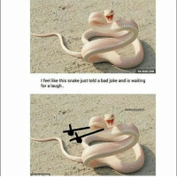 My Math teacher (who is a tall, buff, Asian man I might add) (no pun intended) borrowed lotion from me today: VA SCAG COME  I feel like this snake just told a bad joke and is waiting  for a laugh. My Math teacher (who is a tall, buff, Asian man I might add) (no pun intended) borrowed lotion from me today