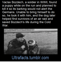 ultrafacts: Source: [x] Click HERE for more facts! : Vaclav Bozdech, a soldier in WWII, found  a puppy while on the run and planned to  kill it so its barking would not alert the  Germans. Unable to bring himself to do  so, he took it with him, and the dog later  helped find survivors of an air raid and  saved Bozdech's life during the Cold  War.  Ultrafacts.tumblr.com ultrafacts: Source: [x] Click HERE for more facts!