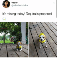 Today, Humans of Tumblr, and Vader: vader  @elizabethhdre  It's raining today! Taquito is prepared