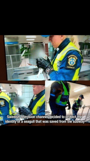 Subway, Television, and Swedish: VAKT  ORU  Swedish television channel decided to protect the  identity of a seagull that was saved from the subway Seagull