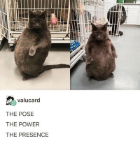 Funny, Power, and Girl Memes: valucard  THE POSE  THE POWER  THE PRESENCE U N I T @theebrunobartlett