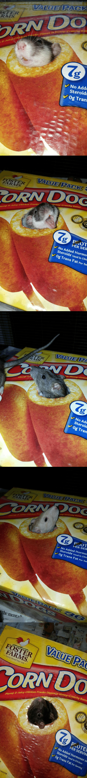 minuscule-goblin: docking-bay-94:   anonymousfragger:  so we got a corndog box for the rats and my brilliant roommate cut a hole so all of our rats will become corndogs  my naym is ratdeez are my frienddis box of snaxit is our land thru hols you maydwe play preteni poke my hedcondog i am   What the fuck, Sagan. : VALUE PACK  STER  RMS  RN DO  & JuicyCickan nks Dipped in Honey-Crunchy Bat  No Add  Steroids  Og Tran.   VALUE PACK  FOSTER  FARMS  ORN DOG  Honey-Crunchy Batter  NARY  ump&Juicy Chicken Frank  Chersescom  СHEE  g P.OT  PER SER  No Added Hormo  Steroids Used in Chic  Og Trans Fat Per Ser   VALUE P  STER  RMS  wnad sincezo  C vD  in Honey-Crunc  Plump &  No Adc  Steroid  Og Tran   VALUE PACK  FOSTER  FARMS  CORN OG  ney-Crunchy Batter  Plump & Julcy Chieken Fra  CHEE  P OT  PER SER  No Added Hormo  Steroids used in Chic  Og Trans Fat Per Ser  VALUIEB RACK C6  DO GS  CORN O0G  the mental  the inma   TAM to 11PM daly  h Ma 4 2017  2 for 3  66  VALUE PAC  daleaaa  FOSTER  FARMS  Family Owned Since 1939  CULISARY CHEE  Plump & Juicy Chicken Franks Dipped in Honey-Crunchy Batte  Chetshest Som  PROTER  PER SERVIN  No Added Hormones or  Steroids Used in Chicken  Og Trans Fat Per Serving  SUGGESTION  EST  MERICAN  CHEF minuscule-goblin: docking-bay-94:   anonymousfragger:  so we got a corndog box for the rats and my brilliant roommate cut a hole so all of our rats will become corndogs  my naym is ratdeez are my frienddis box of snaxit is our land thru hols you maydwe play preteni poke my hedcondog i am   What the fuck, Sagan.