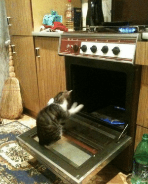 vampiratestakemanhatten:  sweetbabycheesus:  night-clowns:  He's summoning Satan  or maybe he's just warming his paws because they're cold   No, he's a cat. He is definitely summoning Satan. : vampiratestakemanhatten:  sweetbabycheesus:  night-clowns:  He's summoning Satan  or maybe he's just warming his paws because they're cold   No, he's a cat. He is definitely summoning Satan.