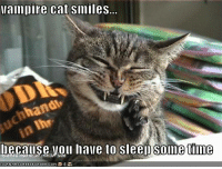vampire cat: Vampire Cat Smiles...  hand  Decause you have to sleep time