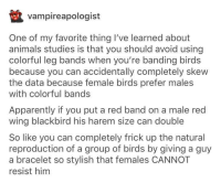 Animals, Apparently, and Flexing: vampireapologist  One of my favorite thing I've learned about  animals studies is that you should avoid using  colorful leg bands when you're banding birds  because you can accidentally completely skew  the data because female birds prefer males  with colorful bands  Apparently if you put a red band on a male red  wing blackbird his harem size can double  So like you can completely frick up the natural  reproduction of a group of birds by giving a guy  a bracelet so stylish that females CANNOT  resist him do birds flex on other birds?