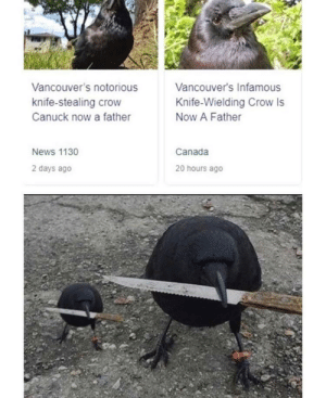News, Canada, and Infamous: Vancouver's notorious  Vancouver's Infamous  knife-stealing crow  Knife-Wielding Crow Is  Canuck now a father  Now A Father  Canada  News 1130  2 days ago  20 hours ago me🔪irl