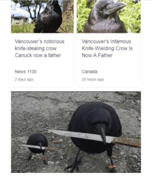 .: Vancouver's notorious  Vancouver's Infamous  knife-stealing crow  Knife-Wielding Crow Is  Canuck now a father  Now A Father  Canada  News 1130  2 days ago  20 hours ago .