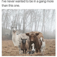 Funny, Gang, and Never: 've never wanted to be in a gang more  than this one FUR GANG.