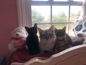 Kitties, You, and  Snuggling: ve you M Kitties snuggling