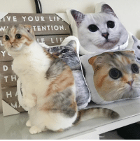 """Do you guys have my pillow yet?! 😆😆 It's Nala birthday month! Use coupon code """"happybirthday"""" for 25% off everything at www.nalacat.com: VE YOUR LIF  TENTION  E LIF  T H Do you guys have my pillow yet?! 😆😆 It's Nala birthday month! Use coupon code """"happybirthday"""" for 25% off everything at www.nalacat.com"""