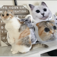 """Hello my friends, it's Nala birthday month! 🍰🎂 We're running a super sale for Nala birthday! Use coupon code """"happybirthday"""" for 25% off EVERYTHING in store. www.nalacat.com: VE YOUR LIF  TENTION  LE LIF Hello my friends, it's Nala birthday month! 🍰🎂 We're running a super sale for Nala birthday! Use coupon code """"happybirthday"""" for 25% off EVERYTHING in store. www.nalacat.com"""