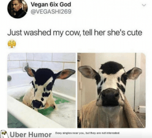 Cute, God, and Sexy: Vegan 6ix God  @VEGASHI269  Just washed my cow, tell her she's cute  Uber Humor  Sexy singles near you, but they are not interested. failnation:  Cute cow