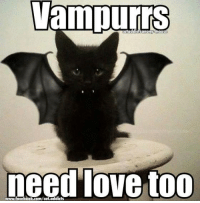 Animals, Anime, and Cats: VEIIIILITS  cataddictsanonyhnous  need love too  www,facebook.com/cat.addicts Have you hugged your Vampurr today? Remember, Halloween is a rough time for black kitties. Although, it's a good idea to keep ALL animals in a few days before and on Halloween. Slumber pawty maybe:-) http://imgur.com/gallery/o4nRRa9