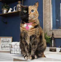 """Being Alone, Memes, and Tbt: veNds  OW LONG A  WHICH SIDE OF  DOOR YOU ARE ON tbt - """"Dear Human, I'm here for you....I promise to make sure you never have to go to the bathroom alone"""". 😹 catlife catsinbathrooms noprivacy"""