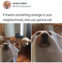 Funny, Adorable, and Witch: venice witch  @hOrchataqueen  If there's something strange in your  neighborhood, who you gonna call Ok this is just amazingly adorable😍 TwitterCreds h0rchataqueen