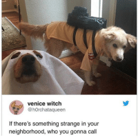 Memes, House, and 🤖: venice witch  O@hOrchataqueen  If there's something strange in your  neighborhood, who you gonna call Dog busters in the house
