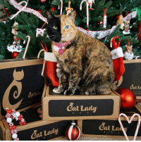 Boxing, Cats, and Disappointed: veNUS  Cat Lada  Catue  catlady ....These are a few of my favorite things.... If you're a crazy cat lady or know someone who is, perk those ears up and listen...and tag some friends who would love this. 😺 It's that time of the year and if you're looking for a unique gift for someone who loves cats, you have to check this out! 🎁 @catladybox is offering a 10% discount for anyone who wants to subscribe to get your own CatLady box. There's pawsome stuff in there for us and your human too....I'm not kitten ya!! Go to the link in @catladybox bio and order using coupon code VENUS for your discount. Mama personally knows Miss CatLadybox & she's not only heavily involved in rescue but donates a percentage of every CatLady Box to local South Florida no-kill non-profit rescues. 🐾 So treat yourself and your human by telling them to order today. You won't be disappointed! 😽😽 catladybox crazycatlady catlady cats giftidea rescue adoptdontshop spayandneuter
