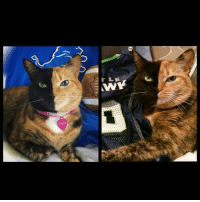 Detroit, Detroit Lions, and Memes: verius  r LE Lions or Seahawks? My eyes may be hawks colors 💚💙💚💙 but I have the heart of a lion, my new home team . 🦁🏈 gotloveforboth playoffs nfl seattle seahawks detroit lions football