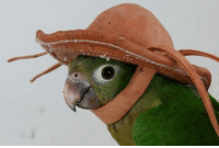 Cool, Hat, and Comment: very cool hat pls comment thank