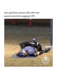 Dank, Instagram, and Life: very good boy saves a life with new  experimental tail wagging CPR The bestest boy that ever borked ❤️  via (instagram.com/policiademadrid)