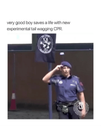 this is so cute omg: very good boy saves a life with new  experimental tail wagging CPR. this is so cute omg