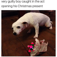 I still love you (@theworldpolice): very guilty boy caught in the act  opening his Christmas present I still love you (@theworldpolice)