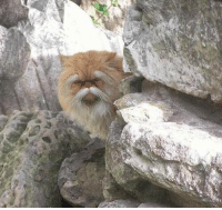 verycooltrash: wise man of the mountain: verycooltrash: wise man of the mountain