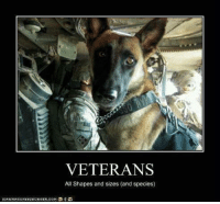 Dank, Http, and Tomorrow: VETERANS  All Shapes and sizes (and species) Thank a veteran tomorrow! And enter to WIN a $200 shopping spree :)  Enter here: http://po.st/luiYtM