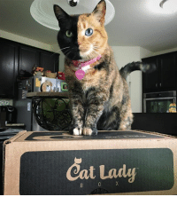 Crazy, Instagram, and Kitties: vevas  Cat Lady  X  0  B We're going live on Instagram at 1:00 EDT to do an unboxing of the @catladybox we just got. 😻 Want to see what's inside and hear more about @catladybox and how you can get one? Join us! 😽 The founder of @catladybox is also a friend and is passionate about rescue (like crazy cat lady passionate) so every purchase helps pets in need. She'll be joining us too answering questions via comments. 😃 Cat appearances anticipated since these boxes always come with things for both kitties (catnip....woohoo) and their humans! callingallcatlovers callingallcrazycatladies catladybox adoptdontshop live livestream