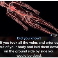 Friends, Memes, and Amazing: VIA 8SH  Did you know?  If you took all the veins and arteries  ut of your body and laid them dowr  on the ground side by side you  would be dead. thats amazing 😍 send this to 80 friends and like and follow 🥗😁🥜🤠☕️⚡️