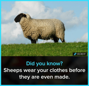 Hmmmm. yes: VIA 8SHIT  Did you know?  Sheeps Wear your clothes before  they are even made. Hmmmm. yes