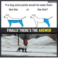 If A Dog Wore Pants: VIA 8SHIT.NET  If a dog wore pants would he wear them  like this  or  like this?  FINALLY THERE'S THE ANSWER
