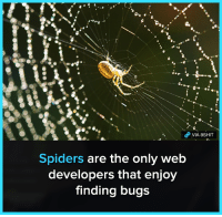 Memes, Spiders, and 🤖: VIA 8SHIT  Spiders are the only web  developers that enjoy  finding bugs 8Shit