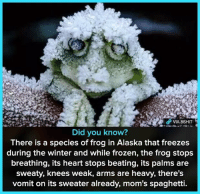 "<p>+10 INTELLECT ©8SHIT via /r/memes <a href=""http://ift.tt/2ApqAt1"">http://ift.tt/2ApqAt1</a></p>: VIA 8SHT  Did you know?  There is a species of frog in Alaska that freezes  during the winter and while frozen, the frog stops  breathing, its heart stops beating, its palms are  sweaty, knees weak, arms are heavy, there's  vomit on its sweater already, mom's spaghetti. <p>+10 INTELLECT ©8SHIT via /r/memes <a href=""http://ift.tt/2ApqAt1"">http://ift.tt/2ApqAt1</a></p>"