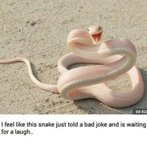 You get a vape meme and you get a vape meme, everbody gets vape memes.: VIA 9GA  I feel like this snake just told a bad joke and is waiting  for a laugh You get a vape meme and you get a vape meme, everbody gets vape memes.