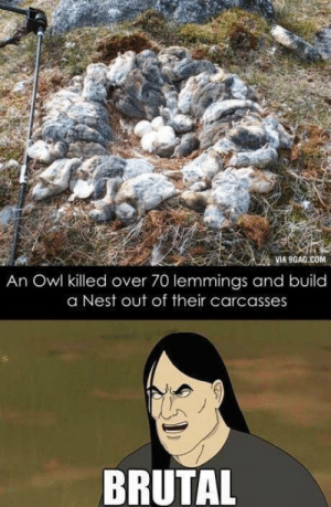 9gag, Fucking, and Nest: VIA 9GAG.COM  An Owl killed over 70 lemmings and build  a Nest out of their carcasses  BRUTAL Owls are pretty fucking metal.