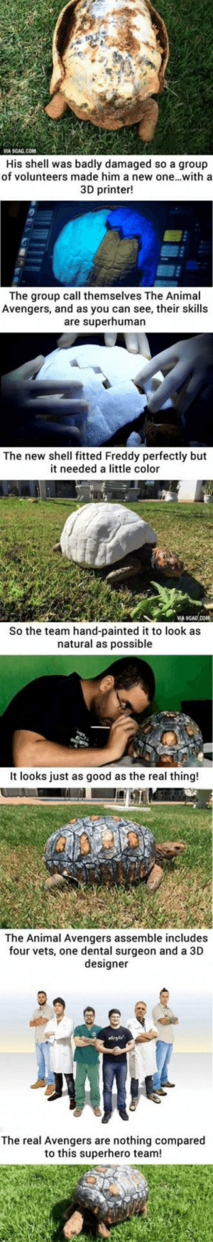9gag, Superhero, and Tumblr: VIA 9GAG.COM  His shell was badly damaged so a group  of volunteers made him a new one...witha  3D printer!  The group call themselves The Animal  Avengers, and as you can see, their skills  are superhuman  The new shell fitted Freddy perfectly but  it needed a little color  VIA  COM  So the team hand-painted it to look as  natural as possible  It looks just as good as the real thing!  The Animal Avengers assemble includes  four vets, one dental surgeon and a 3D  designer  The real Avengers are nothing compared  to this superhero team! awesomacious:  Freddy the turtle ☺️