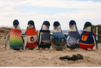 Dank, 🤖, and Phillips: VIA 9GAG.COM Penguins on Phillip Island wear hand-knitted sweaters as part of their oil spill rehabilitation. http://9gag.com/gag/aqmvjGR?ref=fbp