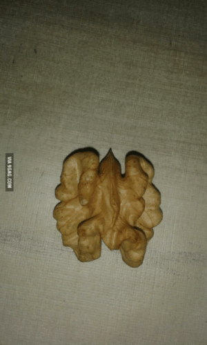9gag, Com, and Via: VIA 9GAG.COM Photo of a smoker lung . Stay healthy and dont smoke