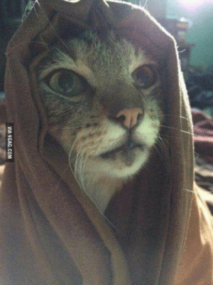 9gag, Tumblr, and Blog: VIA 9GAG.COM rofl-pictures:Khajiit has wares..