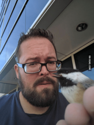 9gag, Disney, and Shit: VIA 9GAG.COM Shit hair day, no sleep, found out Im a Disney Princess when this landed on me and cuddled my hand.